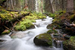 UBCO researcher recommends systematic approach to forest and water supply management